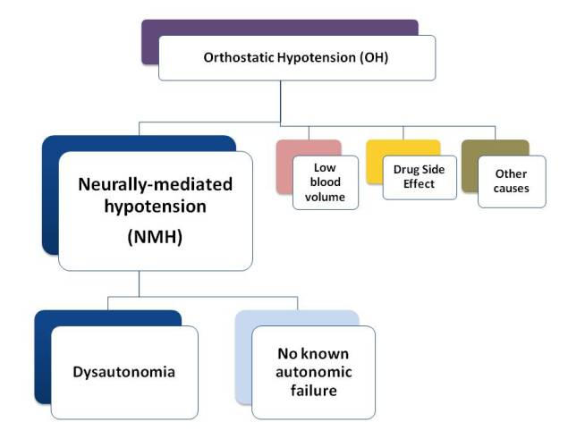 nmh-neurally-mediated hypotension, Skeleton